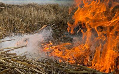 Übung Vegetationsbrand